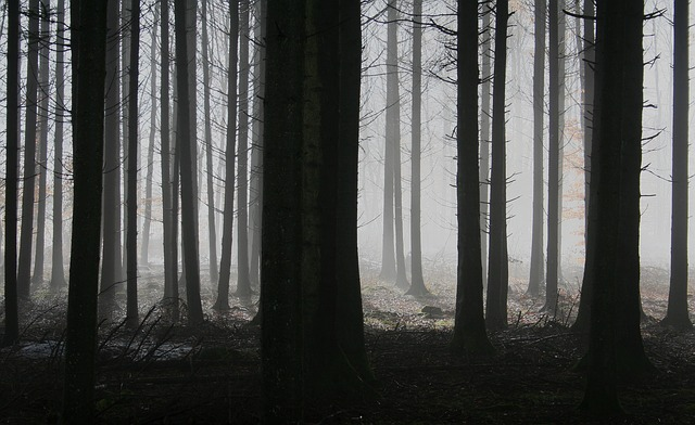 forest-1529055_640